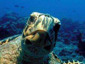 turtle-face-sm.jpg