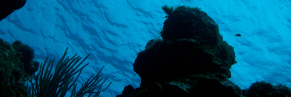 Global Reef Roamers LLC
