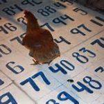 chicken-drop